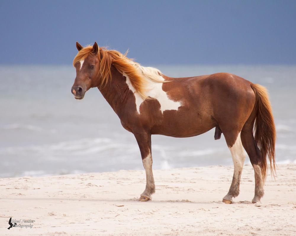 Wild Pony 5 by EdgedFeather