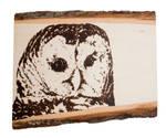 Barred Owl Woodburning