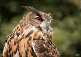 Owlexander 2 by EdgedFeather