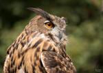 Owlexander 2