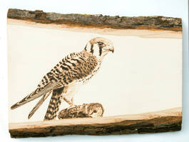 American Kestrel Woodburning by EdgedFeather