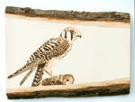 American Kestrel Woodburning