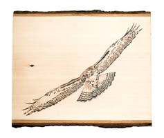 Red Tailed Hawk Woodburning