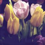 spring brings spirit