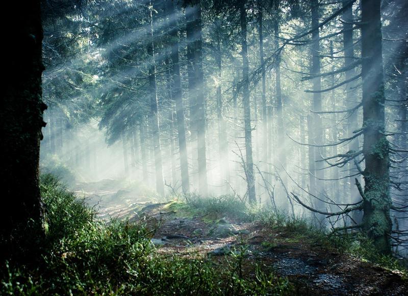 http://fc00.deviantart.net/fs71/i/2010/337/8/d/magic_forest_iii___dark_place_by_thoosah-d33d1ar.jpg