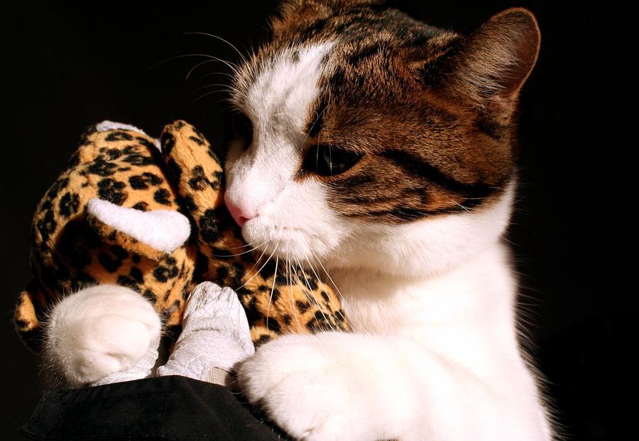 cat love leo by kitsune89