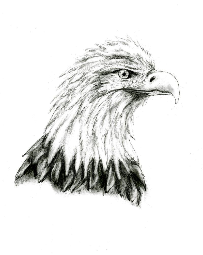 eagle by kitsune89