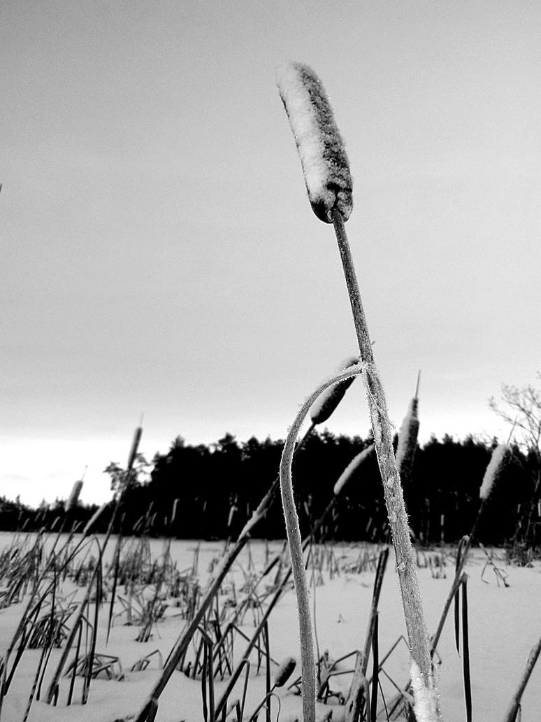 winter morning in sweden by kitsune89