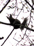 squirrel in spring tree