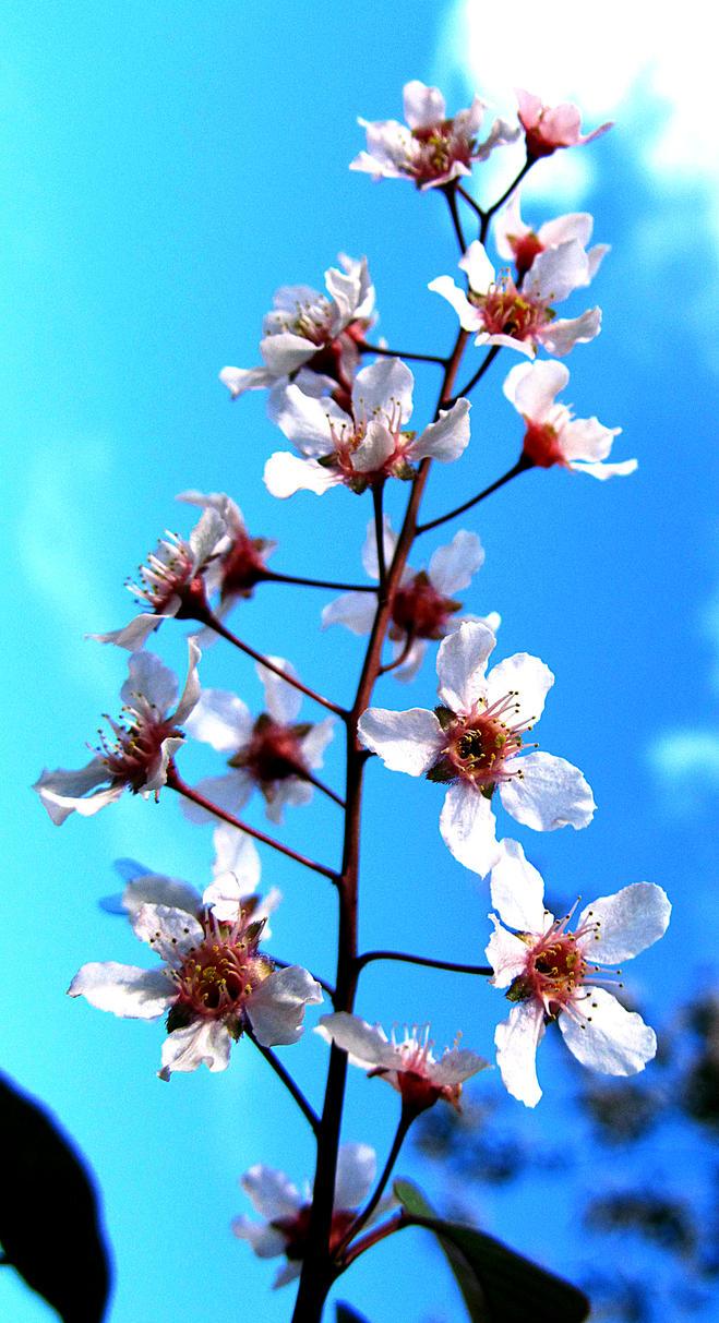 flower in  the sky 2 by kitsune89