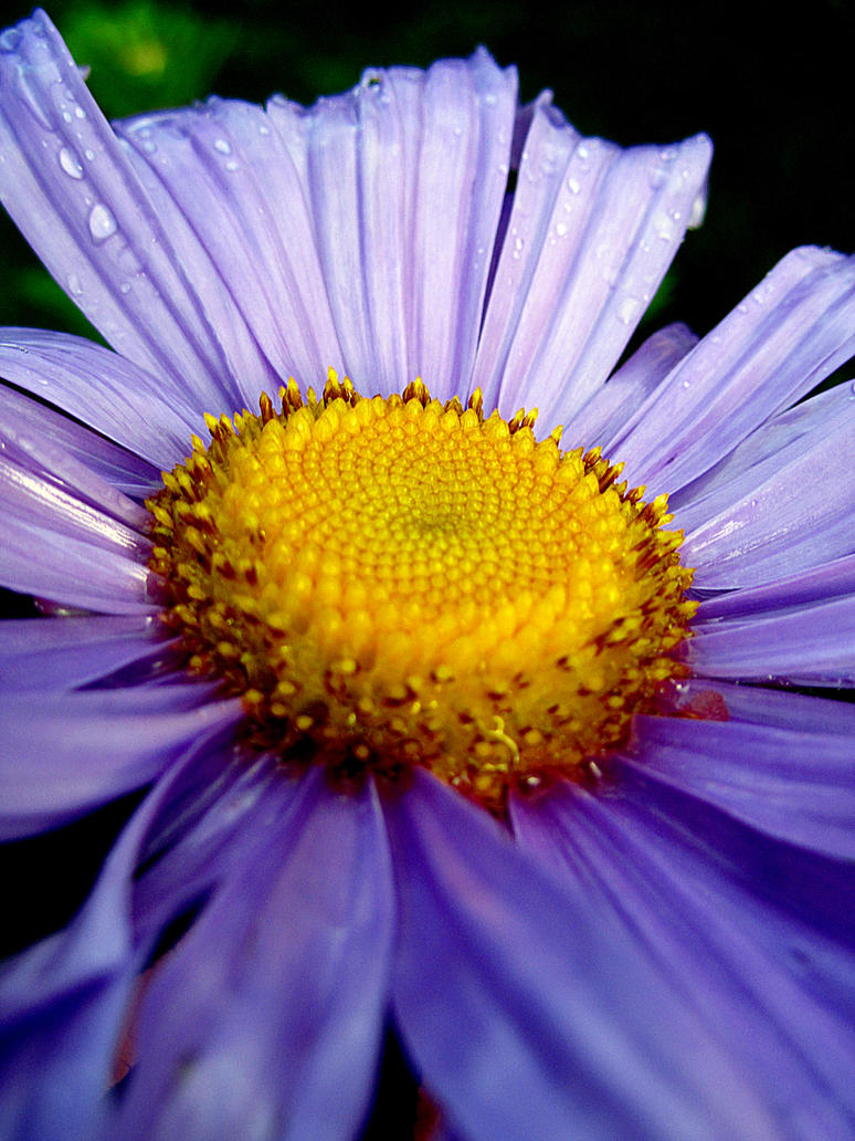 purple flower garden by kitsune89