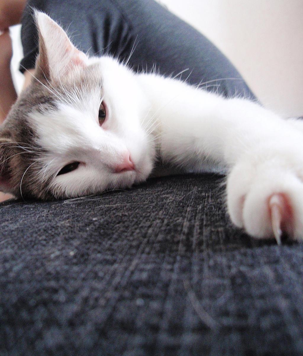 Sleepy cat by kitsune89