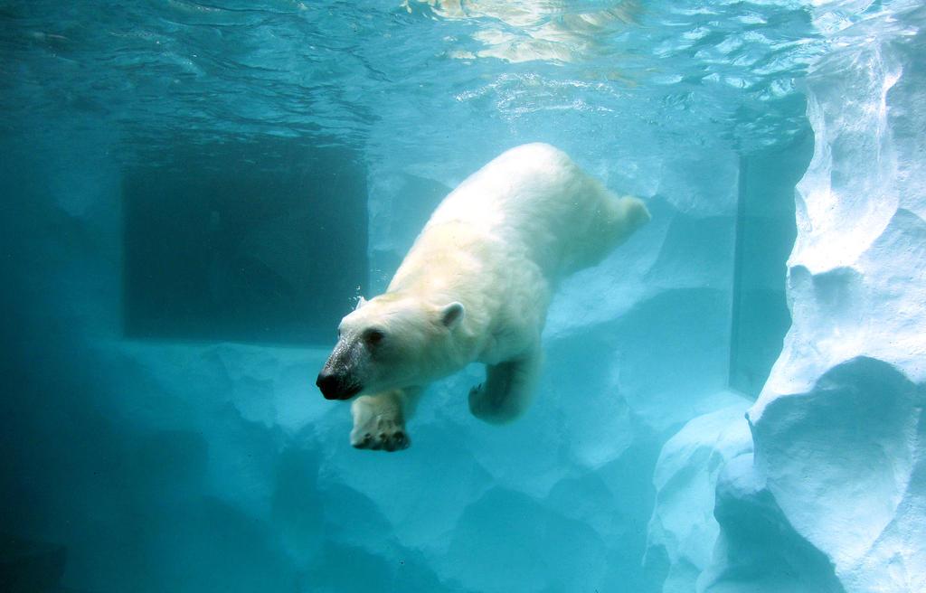 Icebear taking a swim by kitsune89
