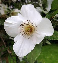 Bloom #1