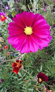 Bloom #2