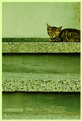 Kitty by SlLVlA