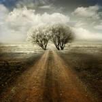 Love Tree by incisler