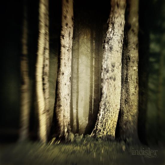 dark forest by incisler