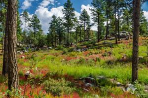 Spruce Mountain Groom Creek Loop Trail by Jonathan-Flash