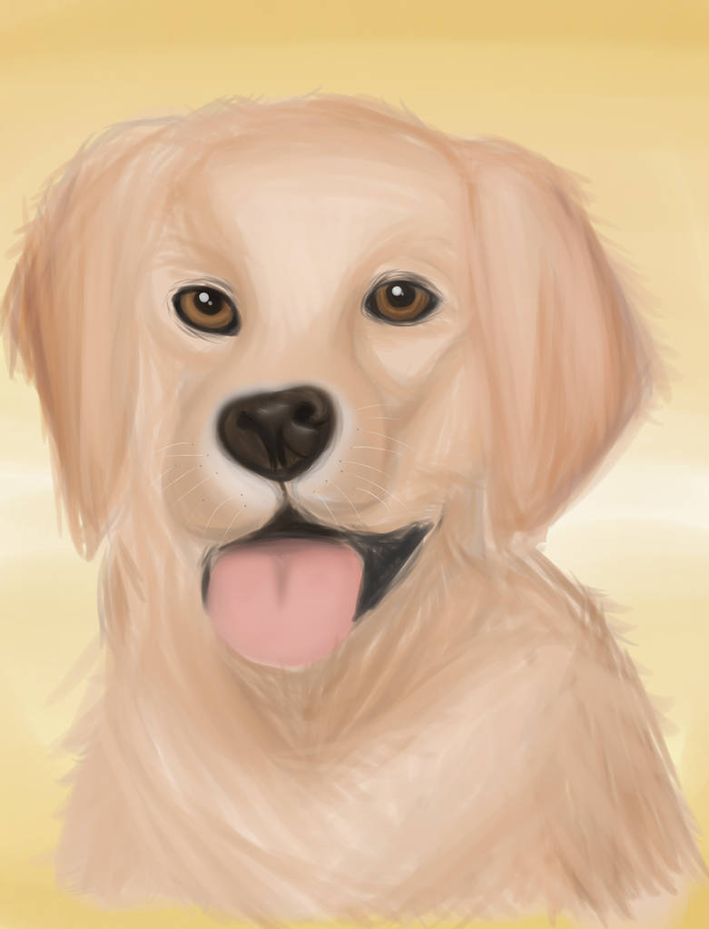 Golden retriever drawing by DRAWINGGIRL10