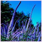 Summertime, blue 2
