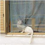 Postcard: Scalea Cat