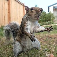 Squirrel 157: Dramatic Squirrel