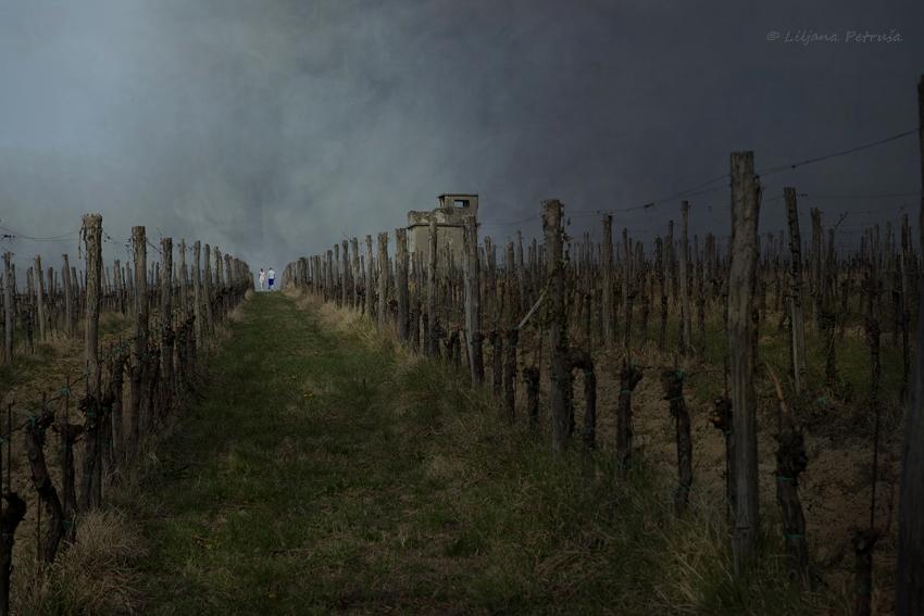 Through the vineyard by lpetrusa
