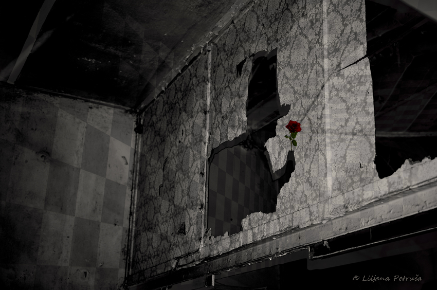 Man with the rose by lpetrusa