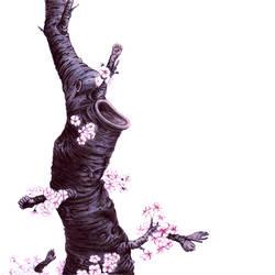 Sakura by MARRASKUUveri