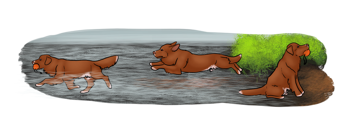 Water Retrieval: Harlow by CuriousCollie