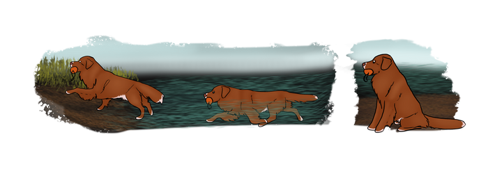 Water Retrieval Pt 2: Harlow by CuriousCollie