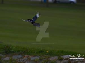 Monochrome Flying Free