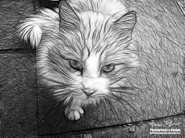 Feline Memories