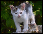 Little Adventurer I
