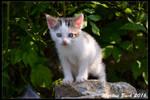 Baby Cat - Day 1