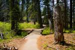 Walk along the path