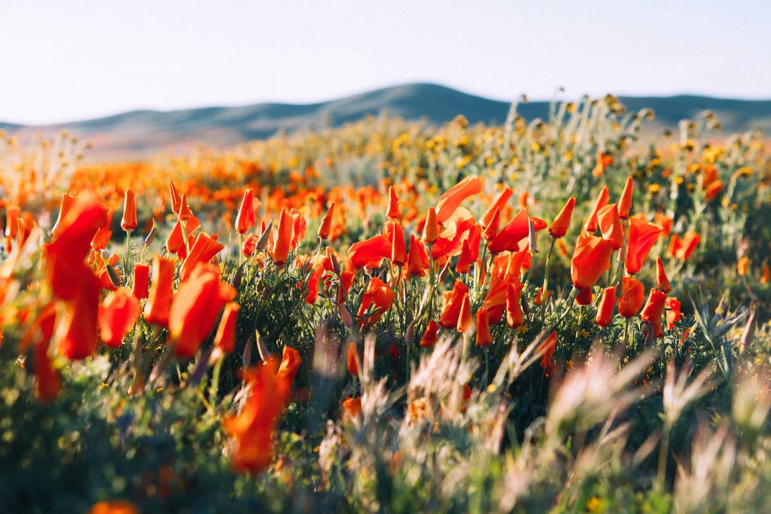 The fields by Mana-C-E