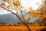 Fall morning