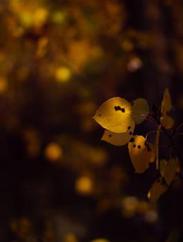 Shadowed leaves