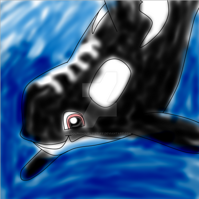 Willy Orcinus shamu! by Dolphingurl21stuff