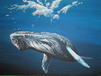 Whale by Ventisca-seer