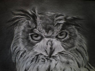 The Owl by Phong98