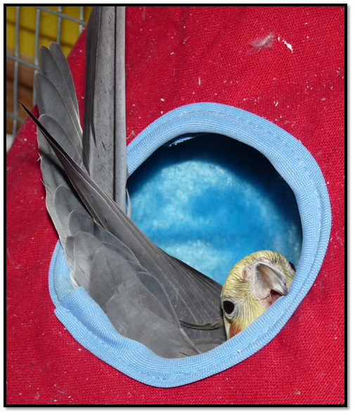 Contest entries! I__m_stuck_by_ilovecockatiels-d4rgzcq