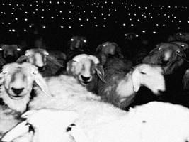 ~Era of Sheep~ by Delfuego5