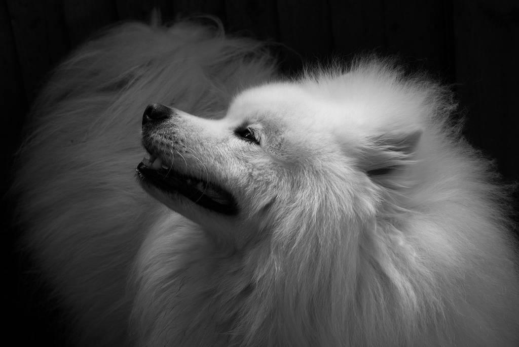 wintersmagicstock's Profile Picture