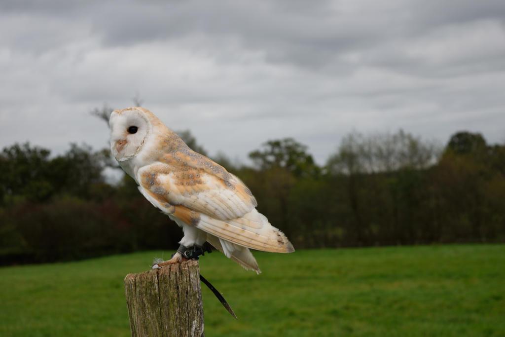 DSC 0195 01 Barn Owl by wintersmagicstock