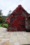 DSC 0115 Autumn Splendour