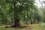 DSC_0308 Sherwood Forest