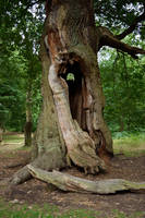 DSC 0107 Sherwood Forest by wintersmagicstock